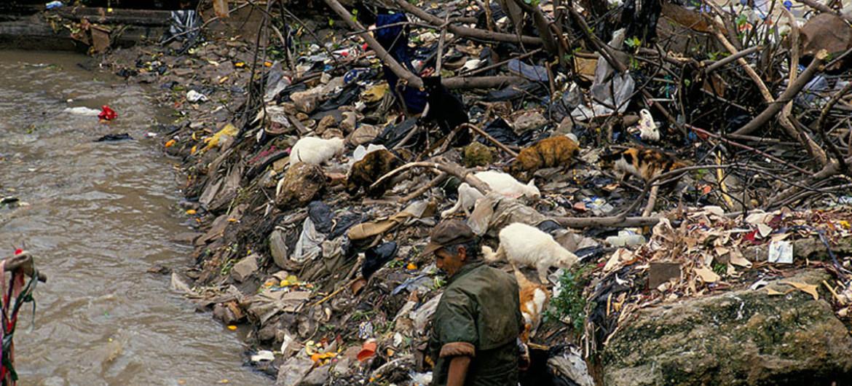 Degradación del medio ambiente provocará millones de muertes prematuras