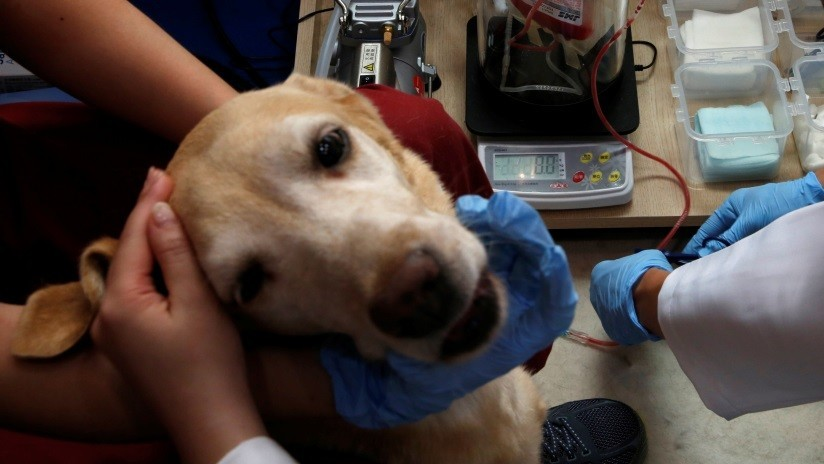 Un perro espera a su amo en la puerta de un hospital sin saber que murió