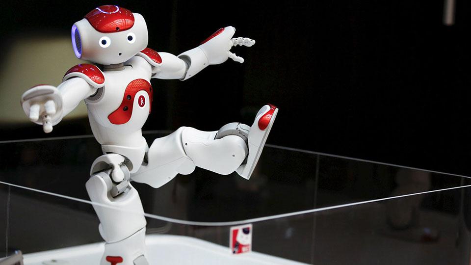 Dos especies animales se comunicaron entre sí con la ayuda de robots