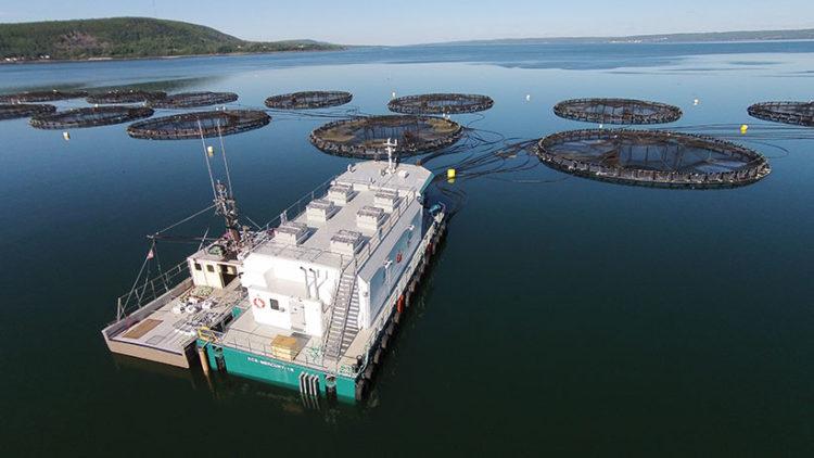 Salmonicultura en Chile, una industria descontrolada