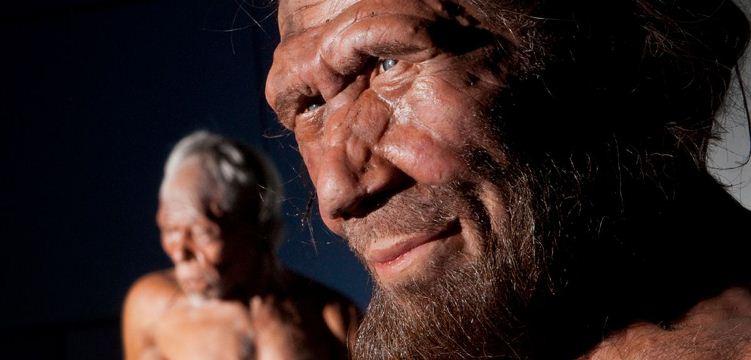 El cambio climático habría empujado a los Neandertal al canibalismo
