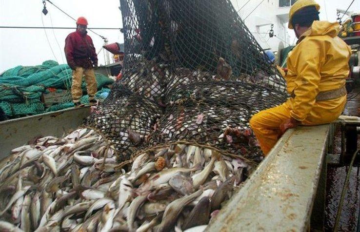 Sobrepesca amenaza nuestros mares y ecosistemas cercanos