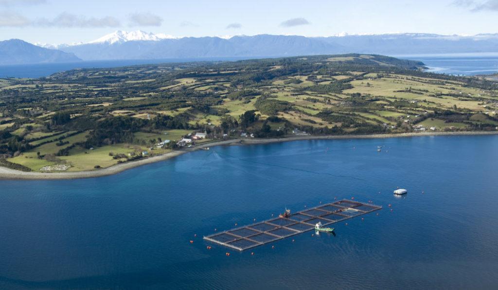 Avanza al Senado proyecto que permitirá a pescadores artesanales capturar salmones fugados