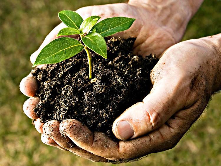Washington aprueba proyecto de ley que permite el compostaje de humanos como acto funerario