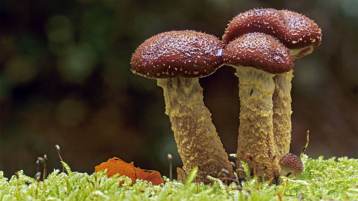 Un hongo gigante de 2.000 años tiene potencial para tratar el cáncer