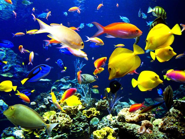 El calentamiento global podría acabar con la vida marina