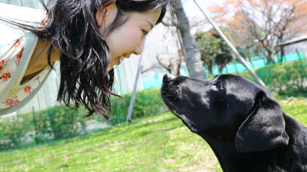 Jóvenes chinos adoptan mascotas para no estar solos