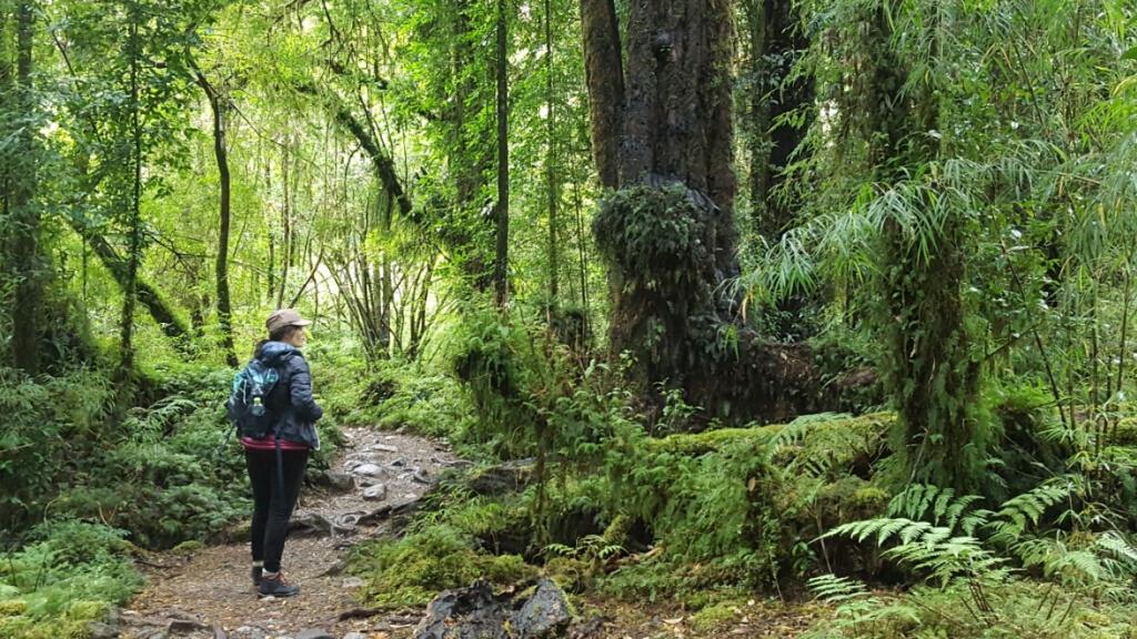 Gobierno firma acuerdo público-privado para la protección de los parques de la Patagonia