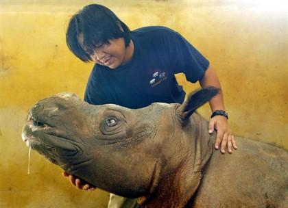 Rinoceronte muere por su avanzada edad. Foto: Europa Press