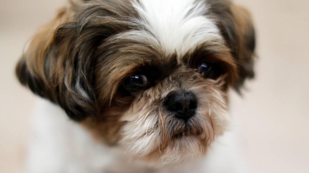 Aplican eutanasia a perrita sana para complacer a su dueña fallecida