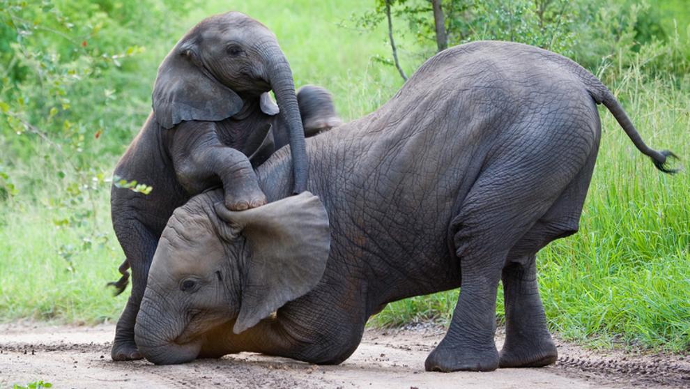 Polémico: Botswana aprueba la libertad de cazar y matar elefantes