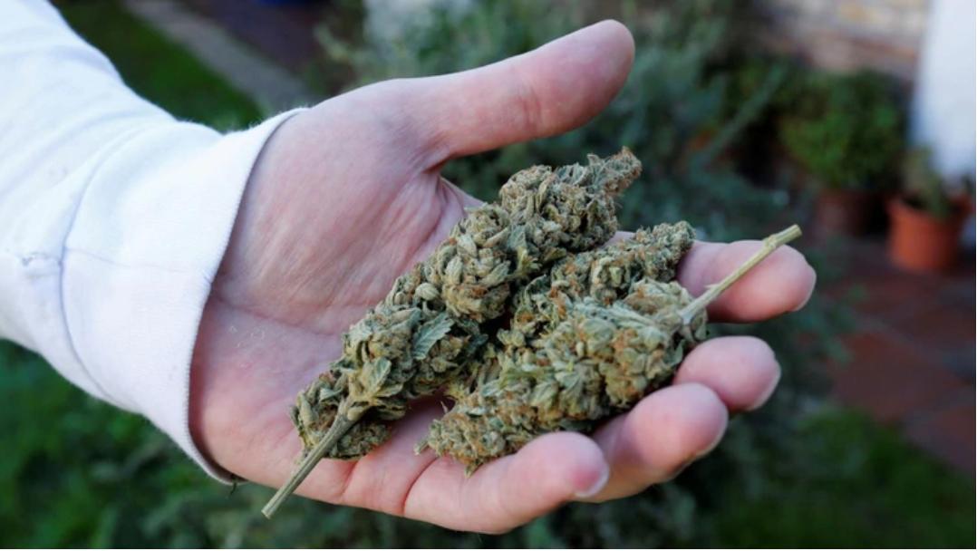 Uso medicinal de la cannabis: Las mentiras del prohibicionismo científico