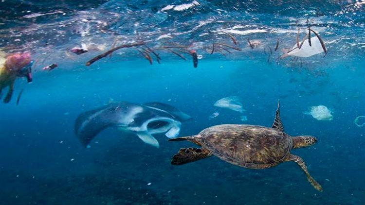 ONU alerta que el plástico acabará con  la vida marina en 2050