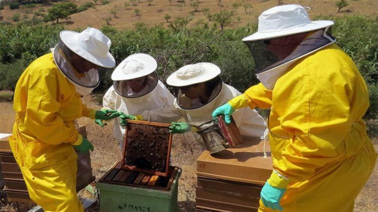 ¡Buenas noticias! la miel de madroño, un remedio casero para el cáncer de colon