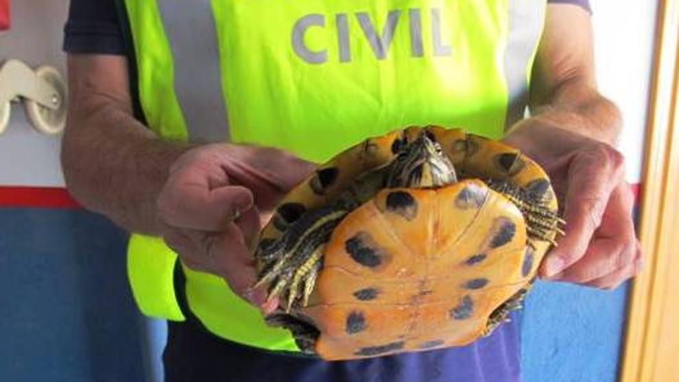 Reptiles se salvan de convertirse en bolsos, correas o billeteras