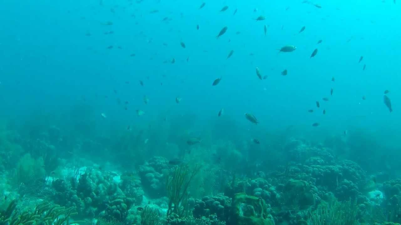 (Foto+video) Las 5 especies más extrañas que habitan en lo más profundo del mar