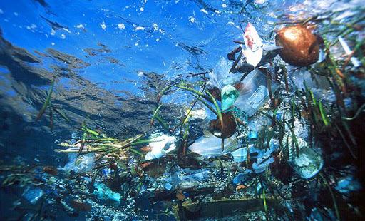 ¡Alerta! Para el 2050 habrá más plásticos que peces en los mares y océanos