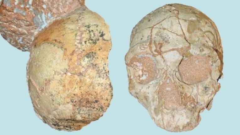 Un cráneo hallado en Grecia podría ser del Homo sapiens más antiguo fuera de África