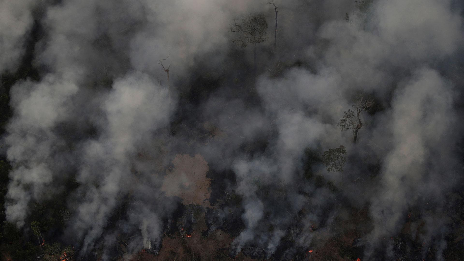 Un número récord de incendios forestales arrasa la selva Amazónica