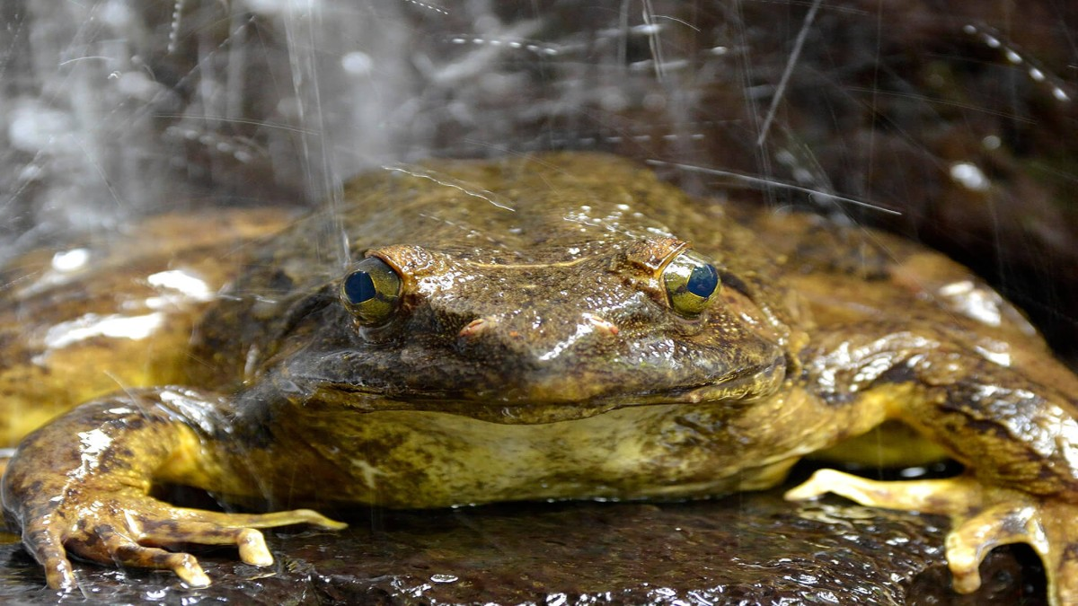 (Foto) Encuentran en Argentina un fósil de una especie desconocida de rana de hace 2 millones de años