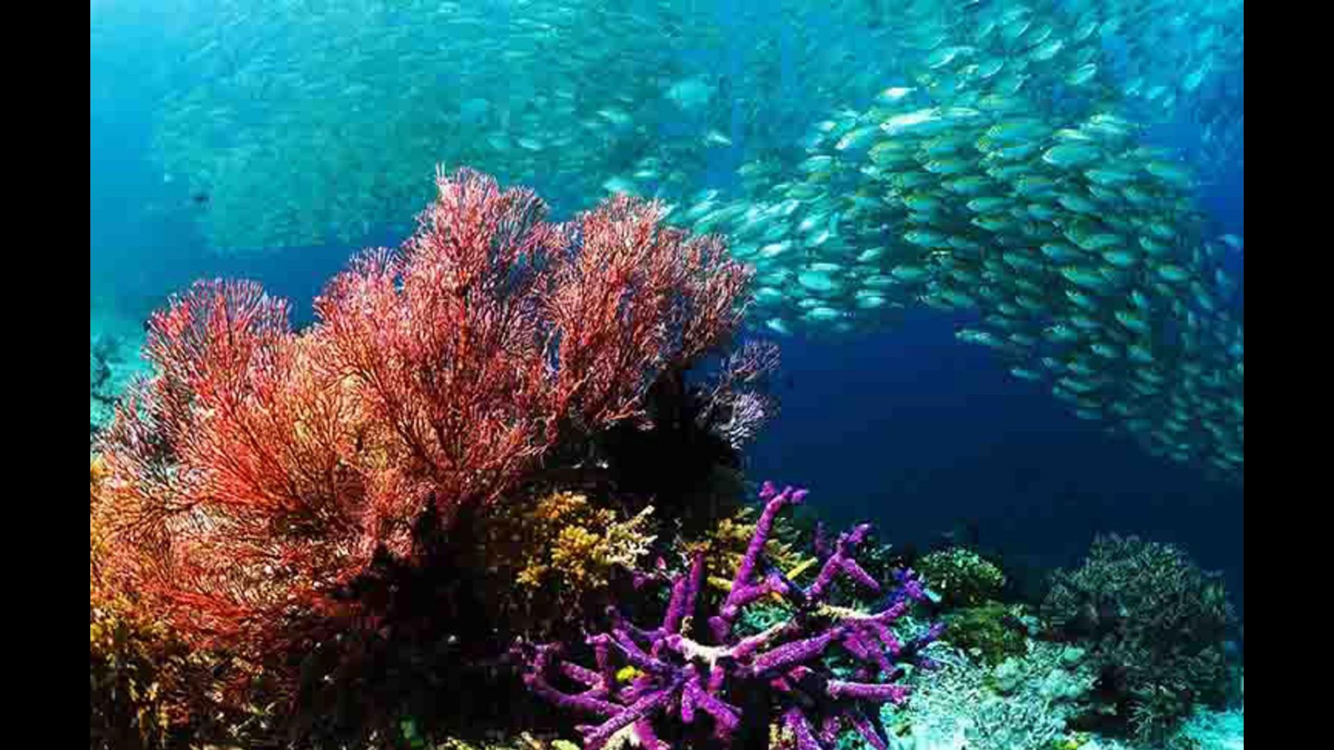 Se lleva a discusión en la ONU acuerdo para proteger a los océanos del mundo