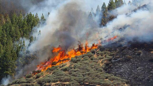 (Videos) Evacúan a 4.000 personas por nuevo incendio forestal en Gran Canaria
