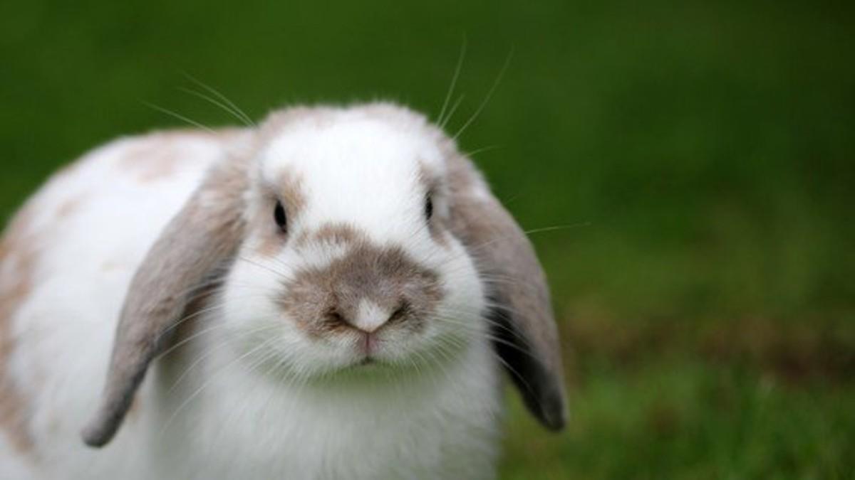 EEUU: Illinois prohíbe la venta de cosméticos probados en animales