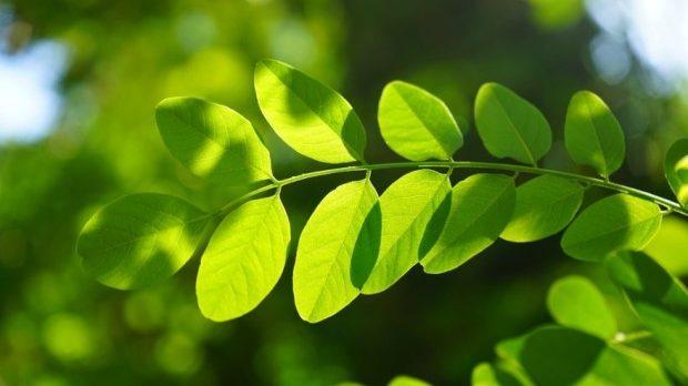 La mano del hombre es responsable de la pérdida gradual de las plantas de la Tierra