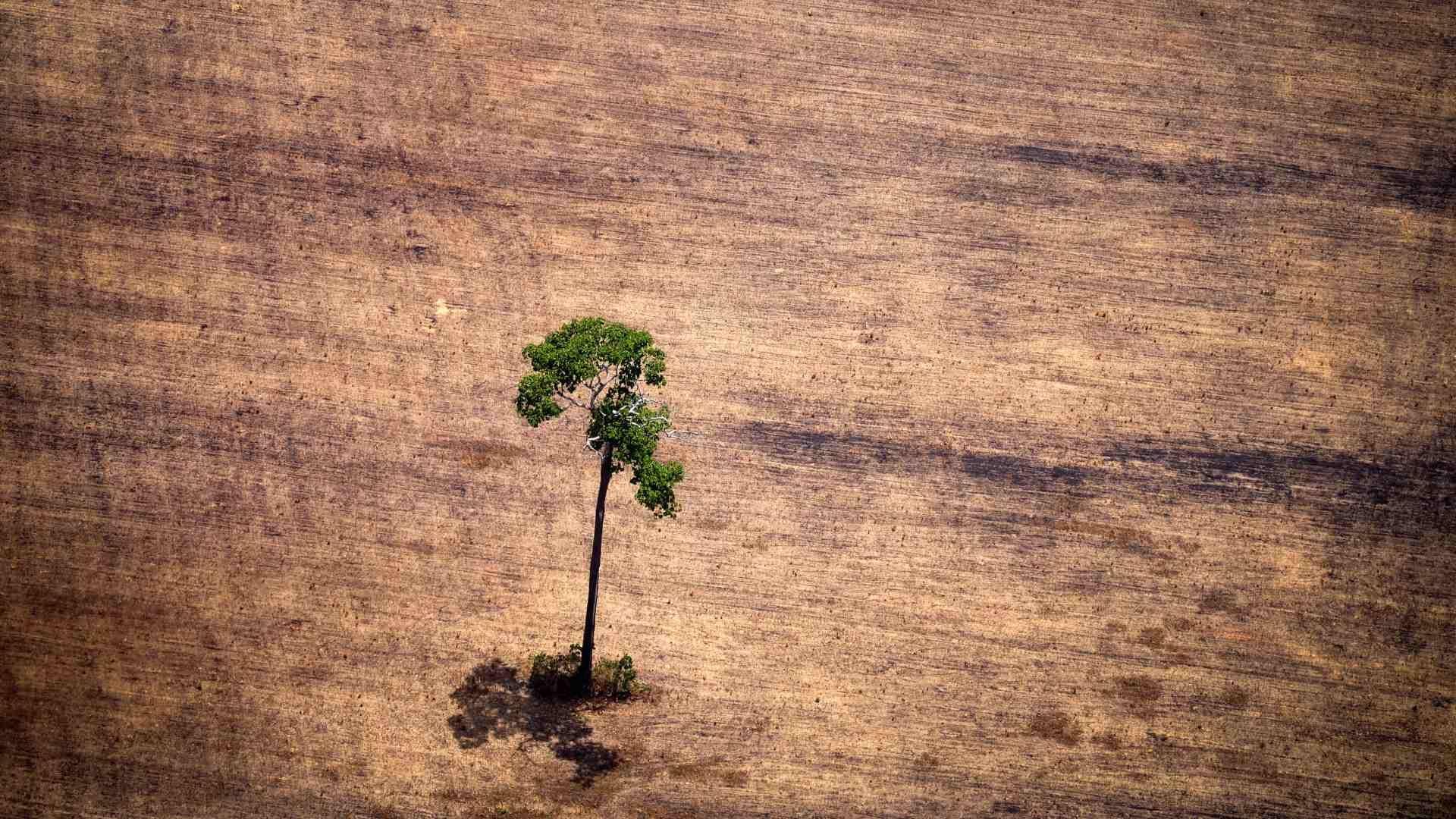 La Amazonía enfrenta a su peor enemigo en décadas: Jair Bolsonaro