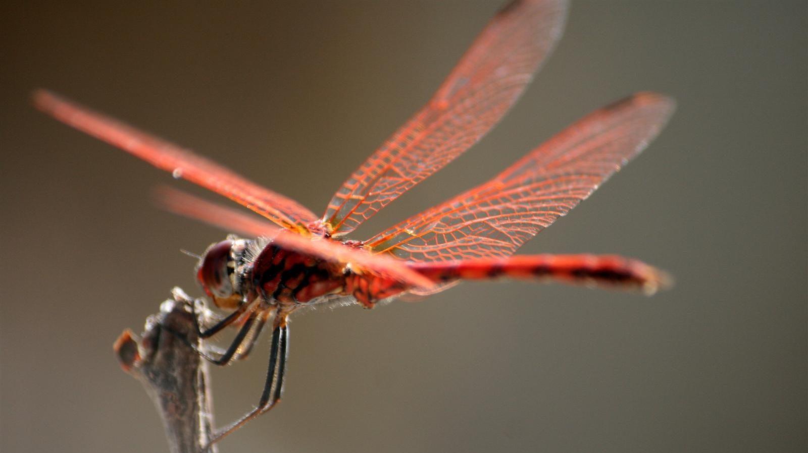 Los pesticidas neonicotinoides son la principal amenaza contra los insectos