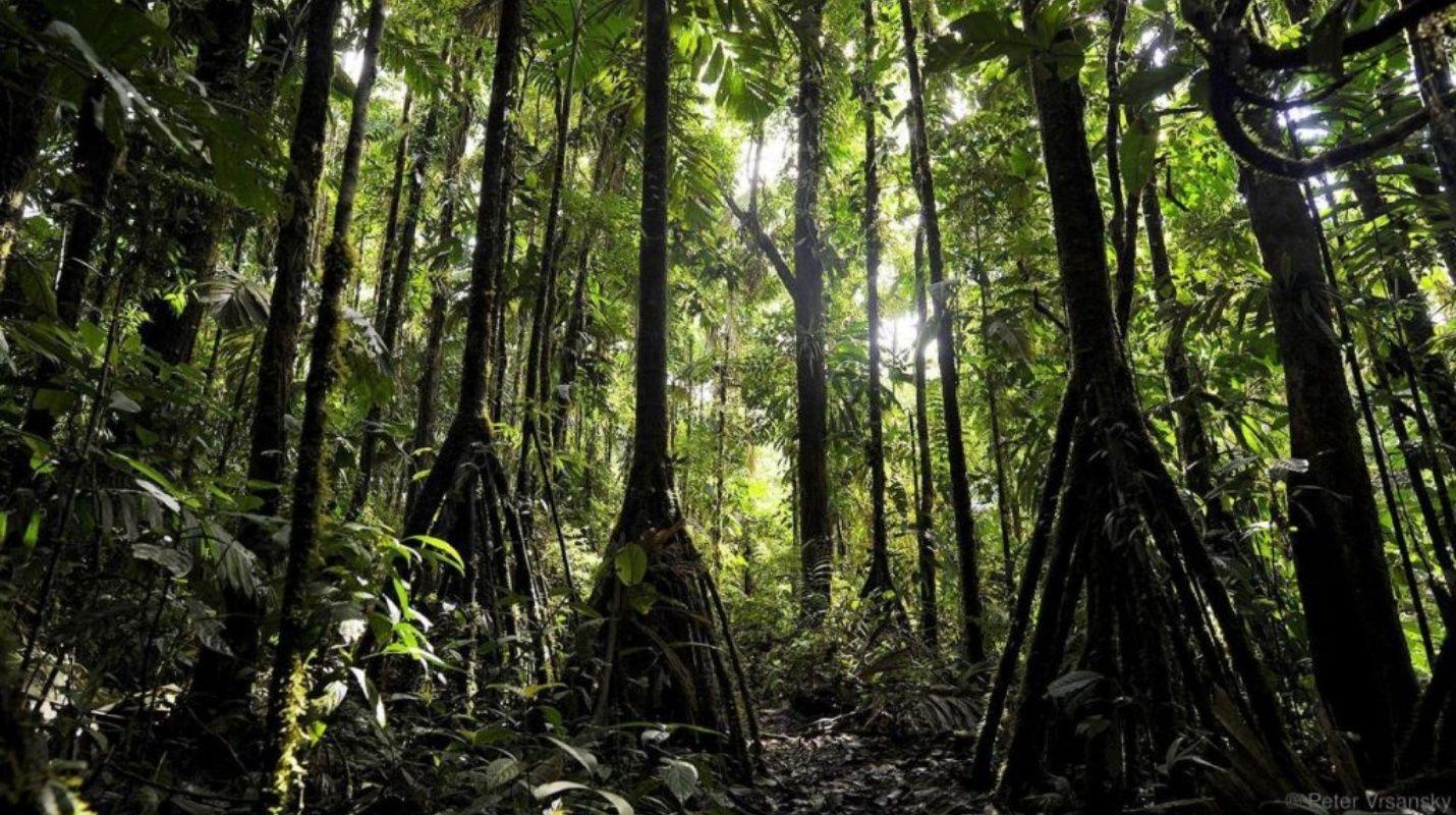 No es ciencia ficción: Resuelto el misterio de los árboles que caminan