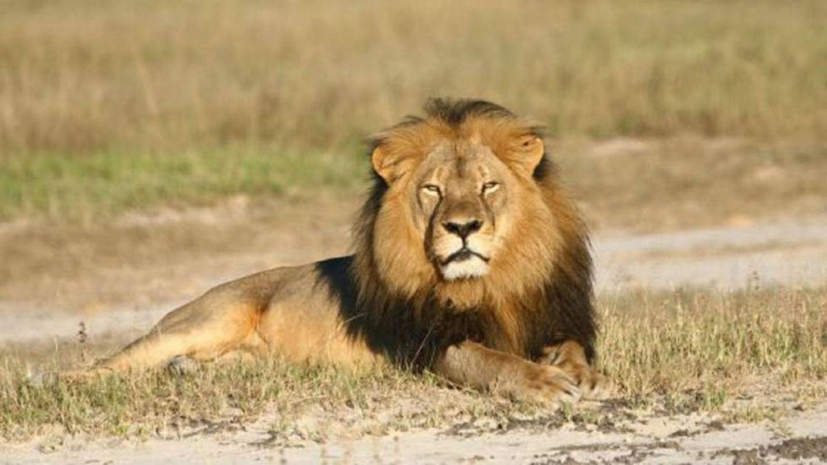 Un perro con aspecto de león causa pánico en España