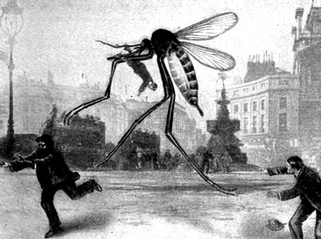 Fuera de control: científicos sueltan mosquito mutante en Brasil que evoluciona en pesadilla