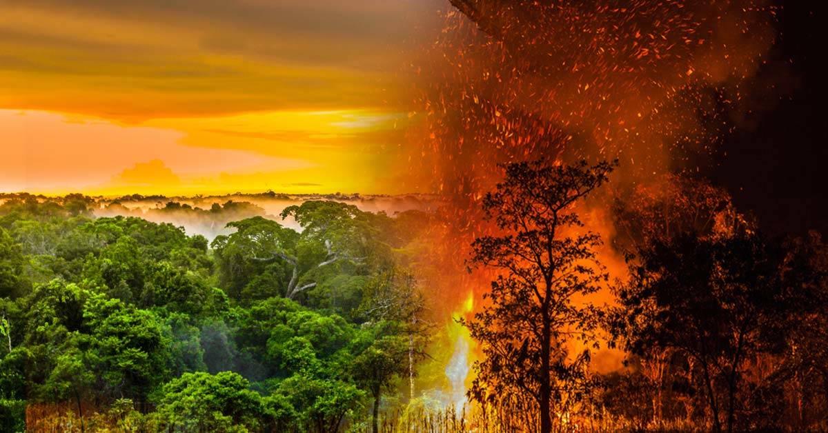 Gobierno de Brasil prohíbe uso del fuego en la selva amazónica por cuatro meses