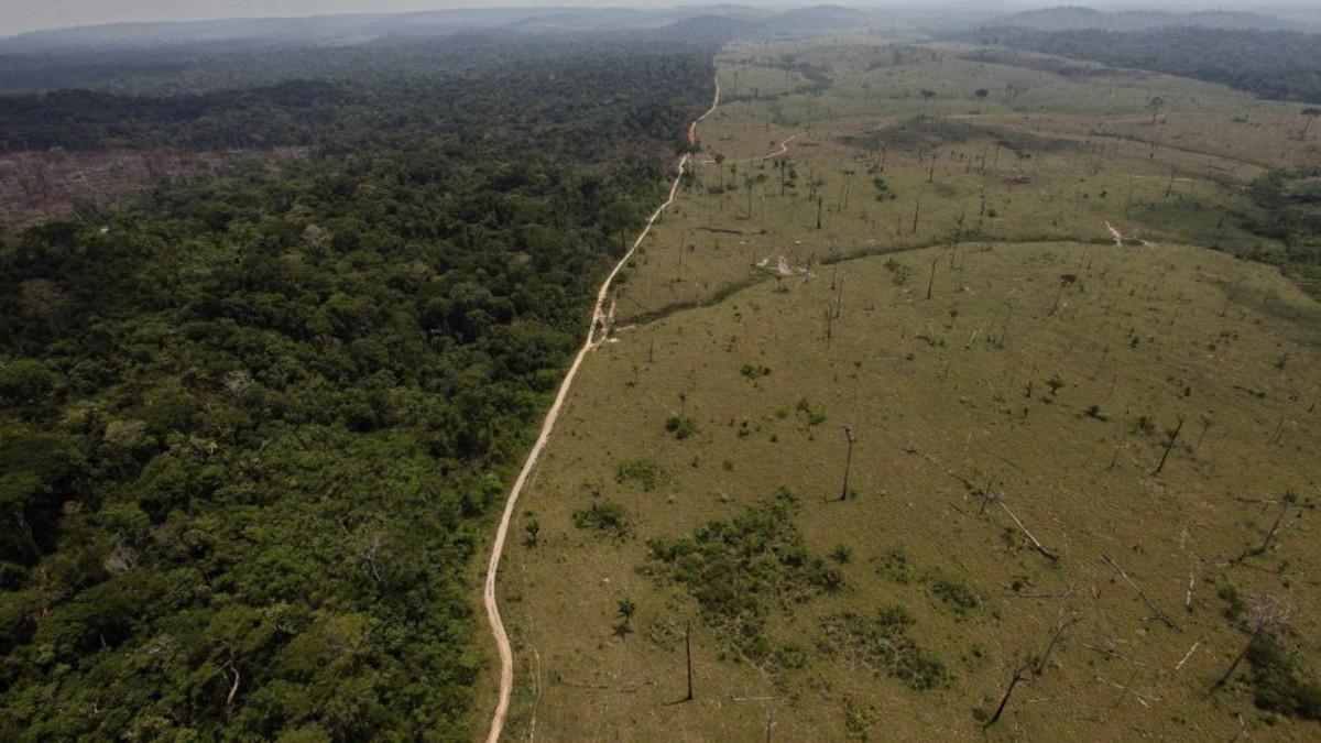 'Pacto de Leticia' así se llama la iniciativa creada en la ONU para salvar la Amazonía