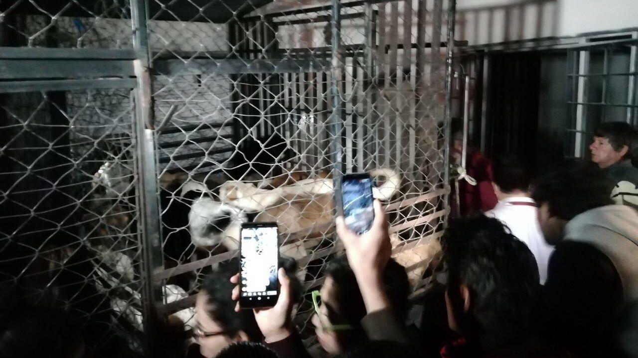 Mujer mexicana robaba perros para matarlos y vender su carne