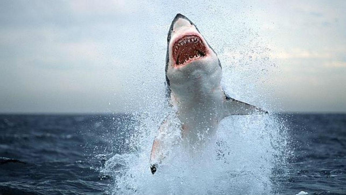 La escalofriante lucha de vida o muerte entre un buzo y un tiburón blanco