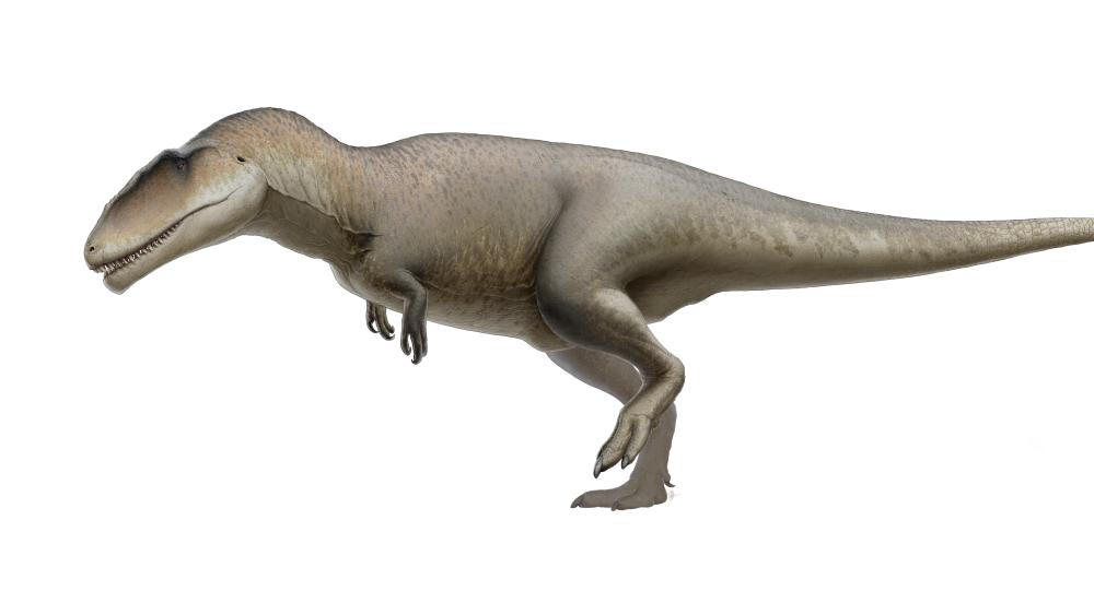 Descubren nueva especie de dinosaurio con dientes de tiburón y de hace 115 millones de años