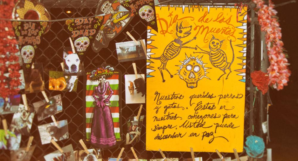 Cómo los mexicanos recuerdan a sus mascotas en el Día de Muertos