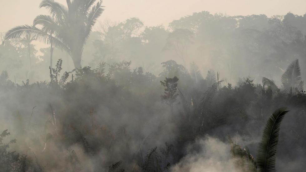 La actividad humana está acabando con la selva amazónica