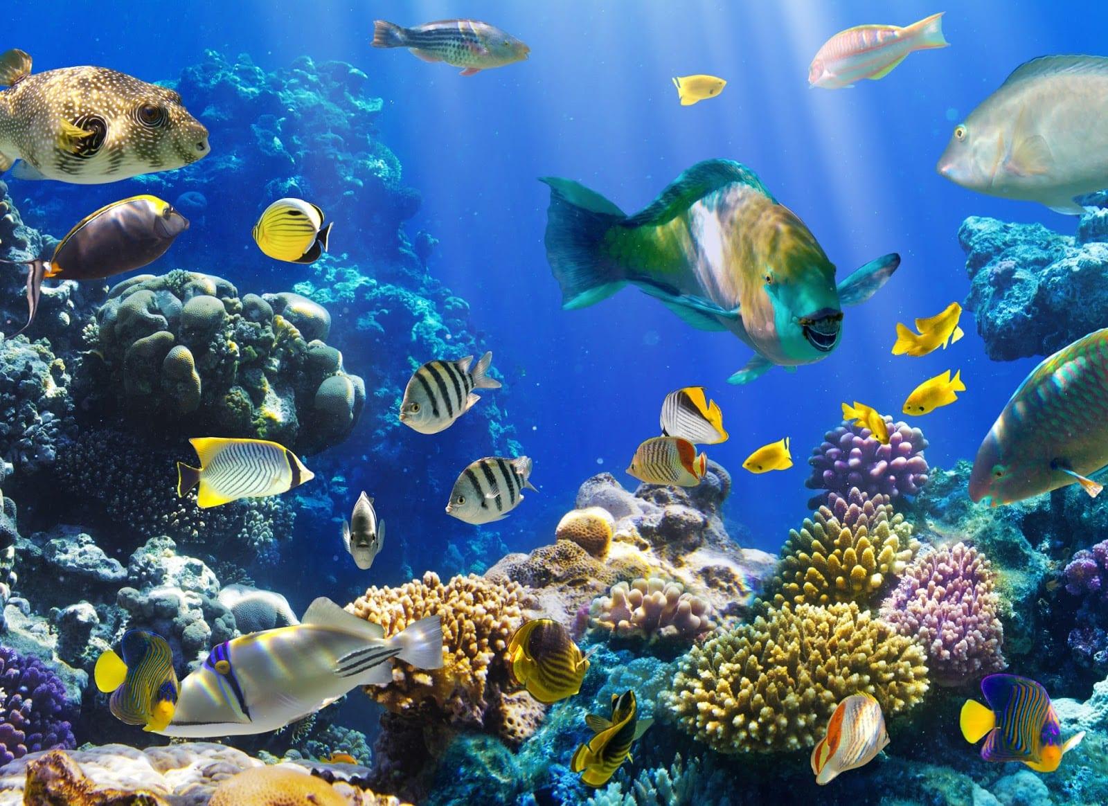 Calentamiento global obliga a los peces a ir al fondo del océano