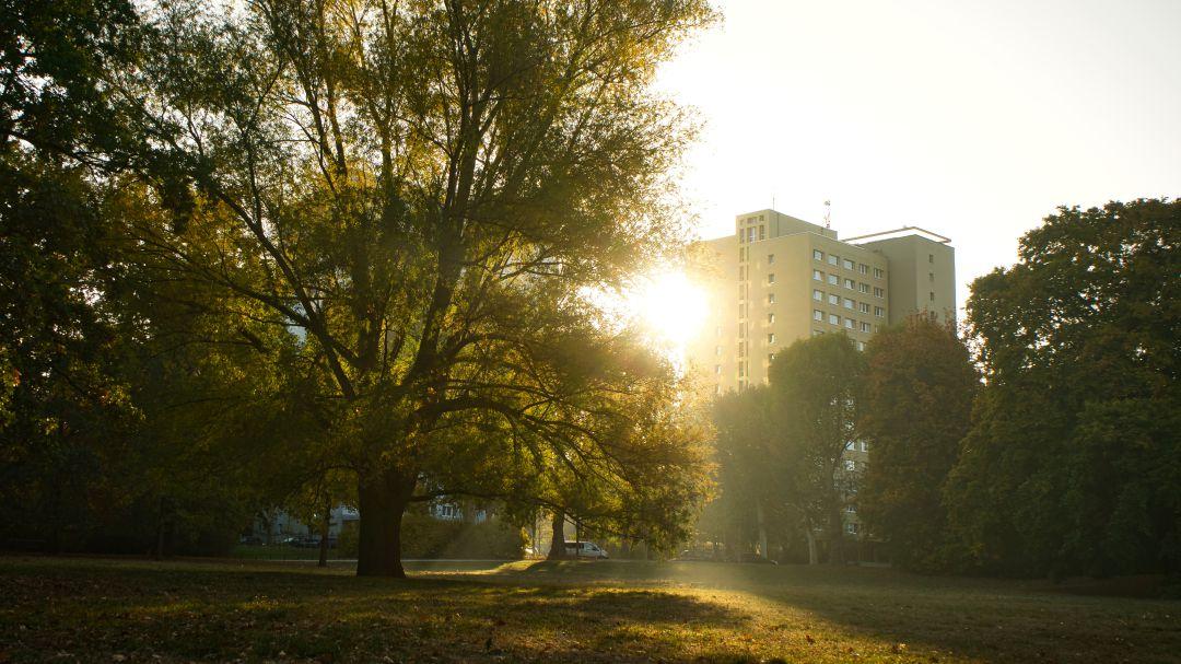 Zonas verdes en las ciudades protegen de mortalidad prematura