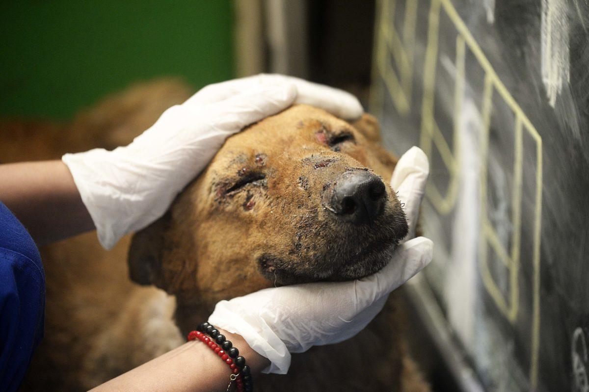 Centro de atención veterinaria para atender a mascotas heridas por los incendios en Valparaíso