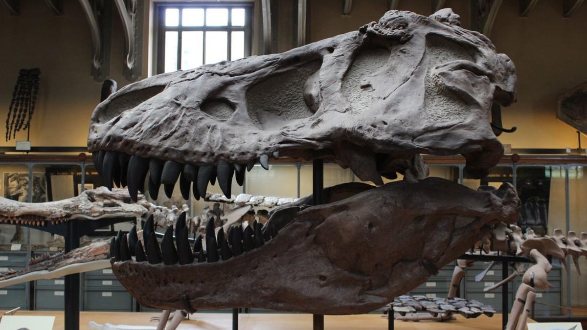 Fósil de dinosaurio hallado en Argentina revela claves sobre la evolución de la especie