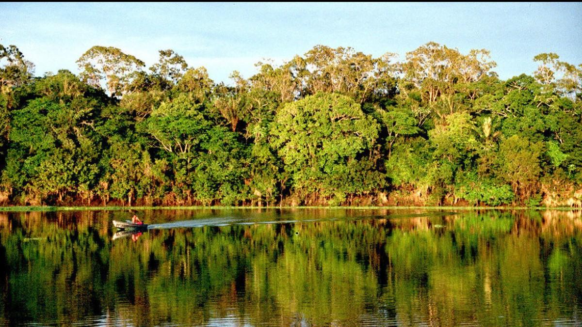 Nuevo secretario de la OCDE recibe alerta de más de 60 organizaciones brasileñas preocupadas por la política ambiental de Bolsonaro