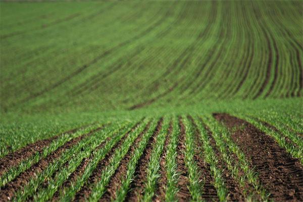 Olas de calor simultáneas pondrán en peligro la producción de alimentos