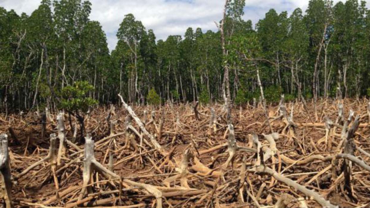 La deforestación podría desatar una pandemia en los seres humanos