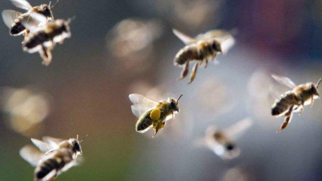 ¿Por qué los insecticidas se han vuelto más tóxicos para las abejas?