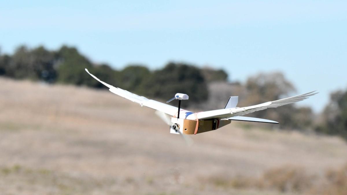 "(Video) ""PigeonBot"" el primer robot capaz de volar como una paloma"