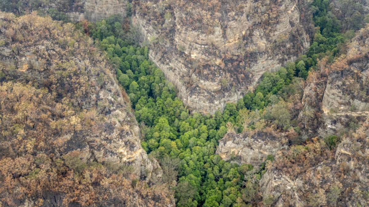 (Fotos) Bomberos resguardan arboleda de pinos Wollemi en Australia